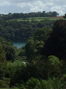 View from the terrace, Trebah Gardens