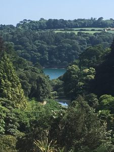 Trebah Gardens Back Drop